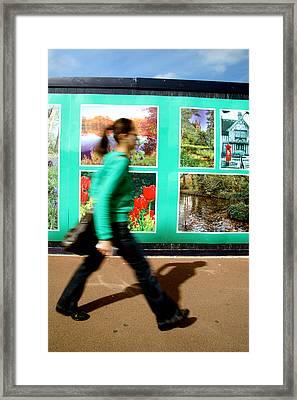Blending In Framed Print by Jez C Self