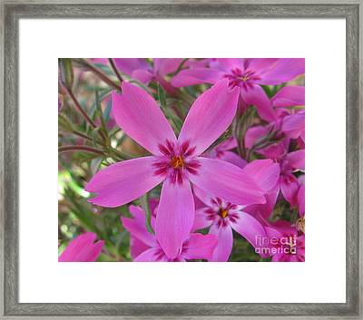 Blissful Framed Print by Tina Marie