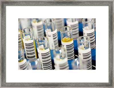 Blood Samples Framed Print by Mauro Fermariello