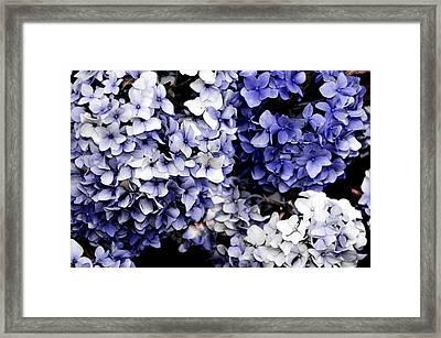 Blue Bloom Cluster  Framed Print by JAMART Photography