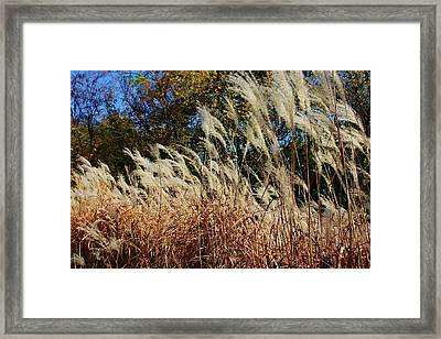 Blowing In The Wind Framed Print by Bruce Bley