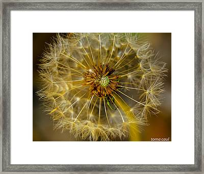Blown Away Framed Print by Toma Caul