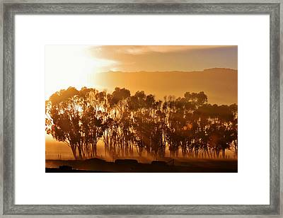 Framed Print featuring the photograph Blue Gum Trees by Werner Lehmann