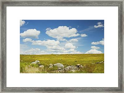 Blue Sky And Clouds Over Blueberry Farm Field Maine Framed Print