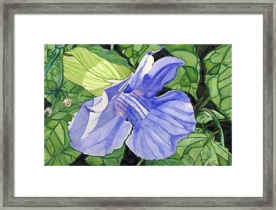 Blue Sky Vine Framed Print by Debi Singer