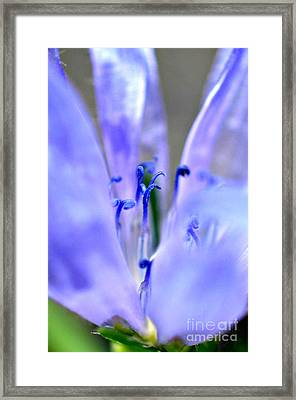 Blue Weed Framed Print by Lila Fisher-Wenzel