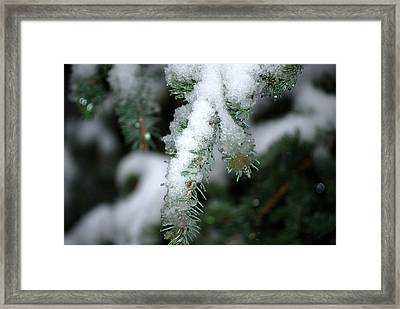 Bokeh Of Evergreen In Snow Framed Print