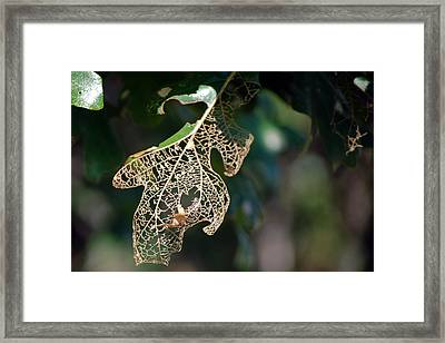 Bokeh Of Leaf Framed Print