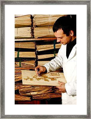 Botanical Collection Framed Print by Mauro Fermariello