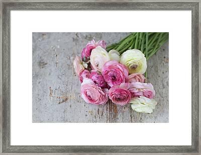 Bouquet Of Pink Ranunculus Framed Print by Elin Enger