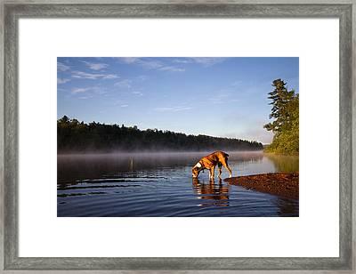 Boxer Dog Framed Print by Stephanie McDowell