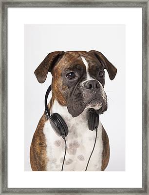 Boxer Dog With Headphones Framed Print by LJM Photo