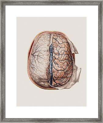 Brain Meninges Framed Print by Mehau Kulyk