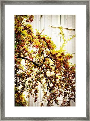 Branch Of Heaven Framed Print by La Rae  Roberts