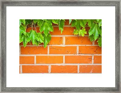 Brick Wall Framed Print by Tom Gowanlock