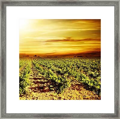 Bright Sunset At Vineyard Framed Print by Anna Om