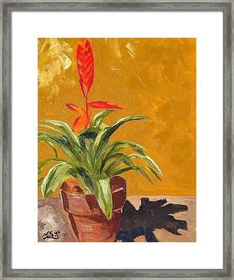 Bromeliad Vriesea Framed Print by Maria Soto Robbins