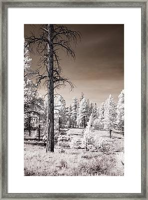 Framed Print featuring the photograph Bryce Canyon Infrared Trees by Mike Irwin