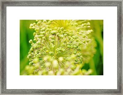 Budding Foliage Framed Print