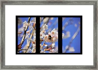 Bumble Bee Framed Print by Svetlana Sewell
