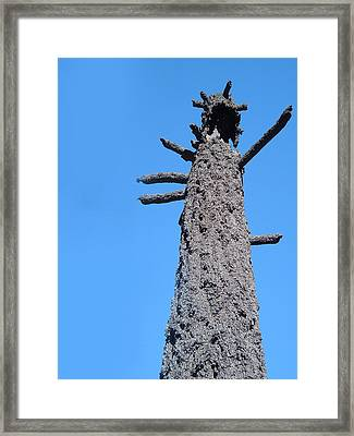 Burned Trees 3 Framed Print by Naxart Studio