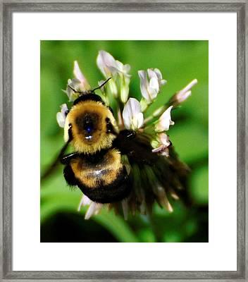 Busy Bee Framed Print by Terri Albertson