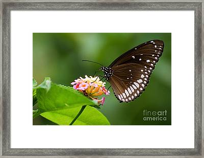 Framed Print featuring the photograph Butterfly by Fotosas Photography