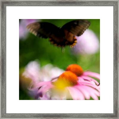 Butterfly In Flight Framed Print by Frank DiGiovanni