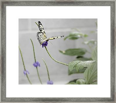 Framed Print featuring the photograph Butterfly by Nick Mares