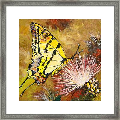 Butterfly Framed Print by Sandy Tracey