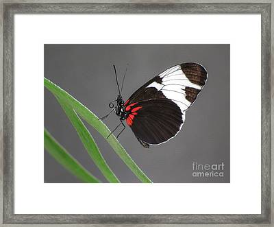Framed Print featuring the photograph Butterfly  by Tam Ryan