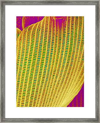 Butterfly Wing Scale,sem Framed Print by Susumu Nishinaga
