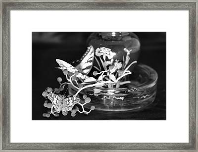 Butterflys Framed Print by Gerald Kloss