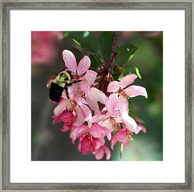 Framed Print featuring the photograph Buzzing Beauty by Elizabeth Winter