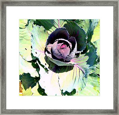 Cabbage  Framed Print by Mindy Newman