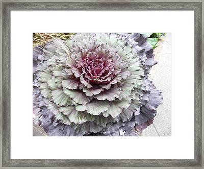 Cabbage Patch Framed Print by Val Oconnor