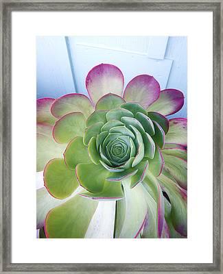 Cactus Framed Print by Patricia Granlund
