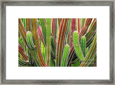 Framed Print featuring the photograph Cactus by Ranjini Kandasamy