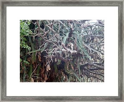 Cactus  Framed Print by Vicky Tarcau