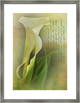 Calla Lily Framed Print by Carolyn Dalessandro