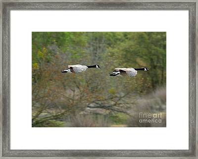 Framed Print featuring the photograph Canada Geese by Doug Herr