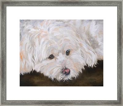Casey Framed Print by Diane Daigle