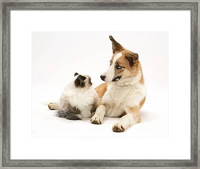 Cat And Dog Framed Print by Jane Burton