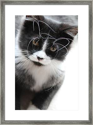Cat In Chaotic Thought Framed Print