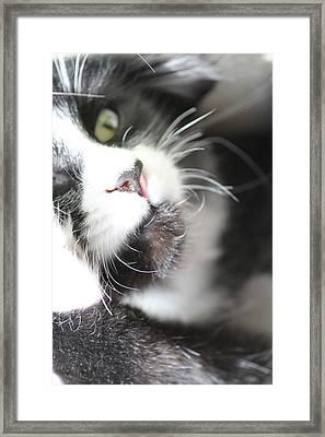 Cat Moment Framed Print