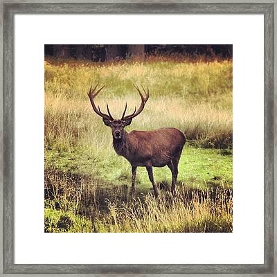 Cervo Framed Print