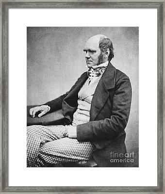 Charles Robert Darwin, English Framed Print
