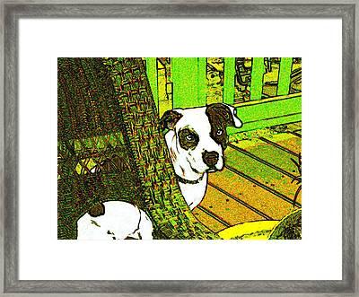 Charlie Bear Framed Print