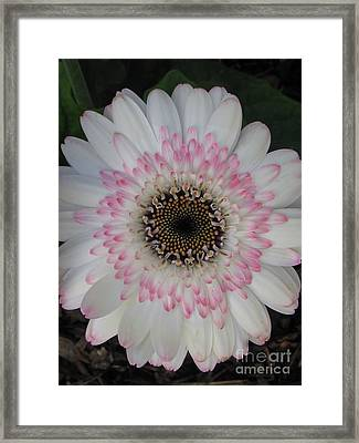 Framed Print featuring the photograph Charming by Tina Marie