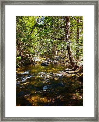 Childs Brook 6 Framed Print by George Ramos